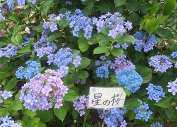 あ8 (350x251).jpg