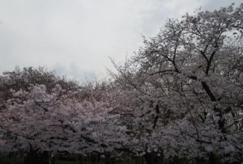 おさんぽ29 (350x237).jpg