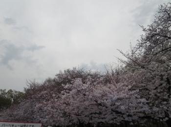 おさんぽ30 (350x260).jpg